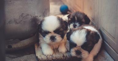 Mitos sobre las mascotas que no puedes dejar de creer