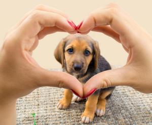 Mitos sobre mascotas que no sabías