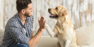 Un perro puede reconocer a una mala persona